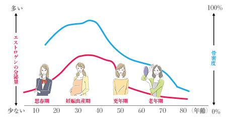 ⼥性のライフステージと女性ホルモン と骨密度の関係